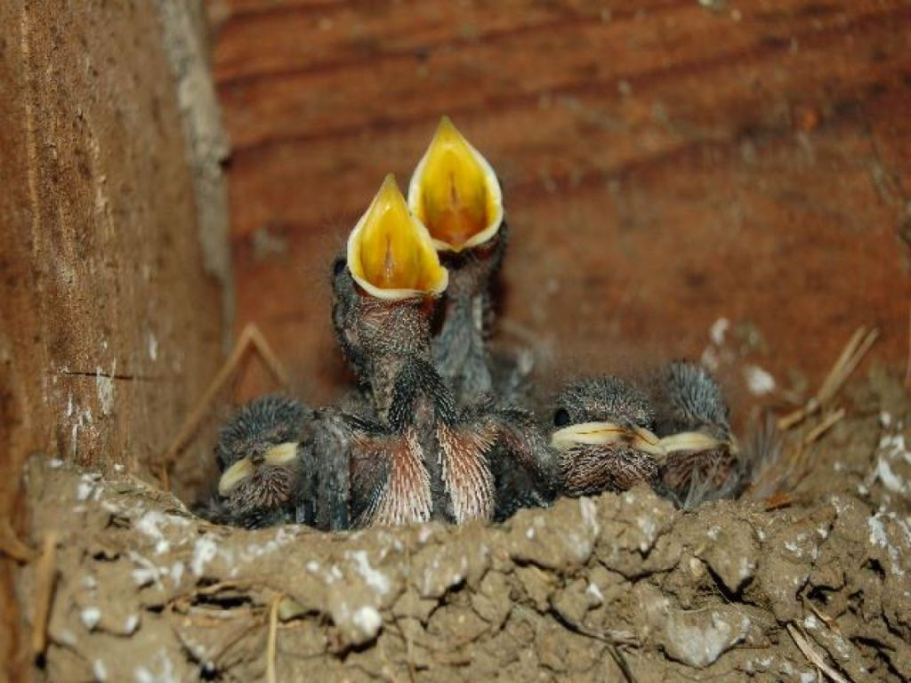 Installation de nichoirs pour oiseaux en alsace