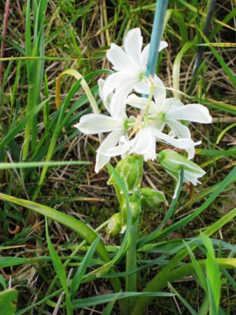 Transfert, multiplication de plantes protégées