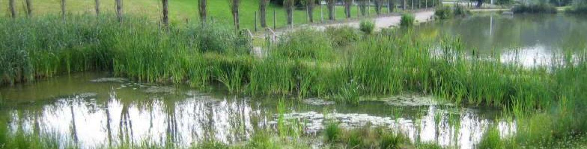 Renaturation de l'étang de Ferrette