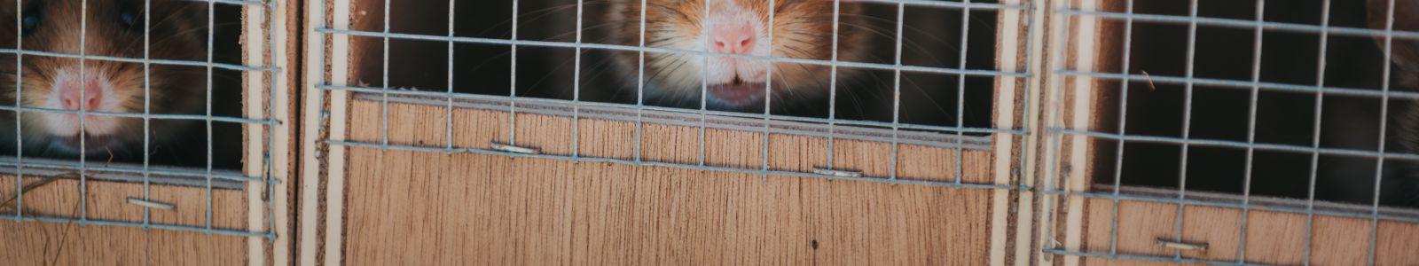 Préservation du hamster d'Alsace