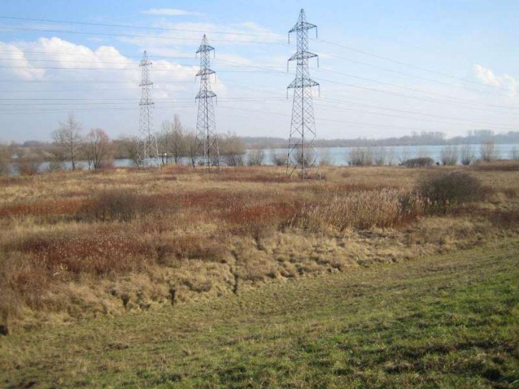 Restauration des milieux naturels rhénans